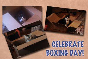 Cats-Celebrate-Boxing-Day-Photo