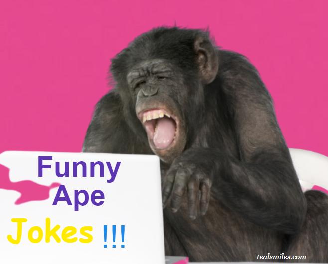 Funny Ape Jokes--tealsmiles