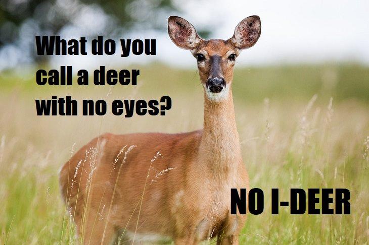Funny Antelope Joke