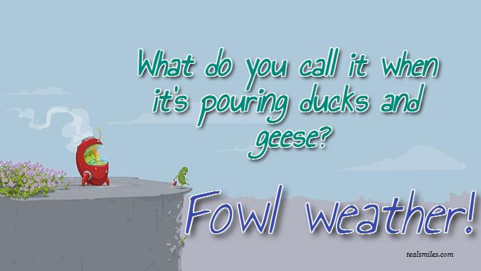 Funny+Fowl+weather-jokes 7